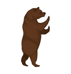 Color image with bear of standing vector