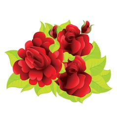 Red roses with leaves vector image