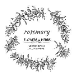 rosemary set vector image vector image
