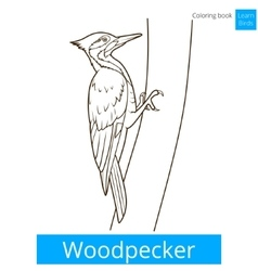 Woodpecker bird learn birds coloring book vector