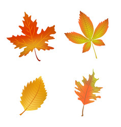 autumn leaves set vector image vector image