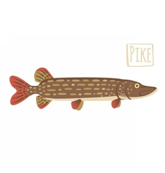 Pike cartoon vector image