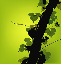 Vine growing on a tree vector