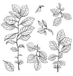 Bush branch set vector