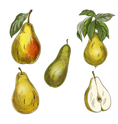 five pears design elements vector image