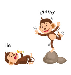 opposite words lie and stand vector image