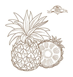 Outline hand drawn pineappleflat style thin line vector