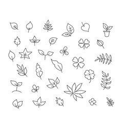 different types of leaves set of various species vector image vector image
