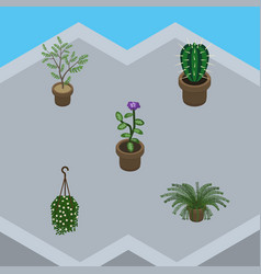 Isometric flower set of peyote flower plant and vector