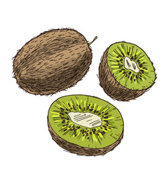 kiwi with halves of fruits full color sketch vector image