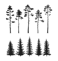 Set with pine trees isolated on white vector