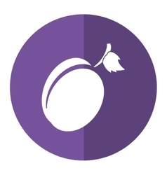 Plum organic fruit purple circle shadow vector