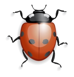 Ladybug isolated with shadows vector