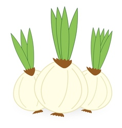 Onion isolated on white background vector