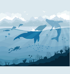 Diver and whales with dolphins jellyfish fish vector
