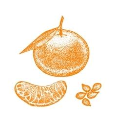 Mandarin hand draw sketch vector