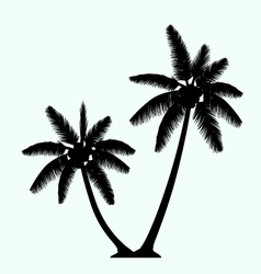 Realistic palm tree silhouette twin vector