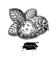 Strawberry drawing isolated hand drawn vector
