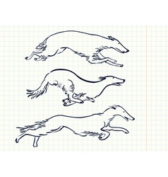 Russian borzoi dogs vector