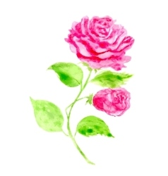 Hand drawn Rose for greeting vector image vector image