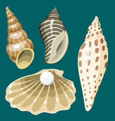 sea marine animals and shells souvenirs cartoon vector image vector image