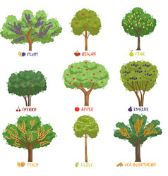 Different fruit trees sorts with names set garden vector