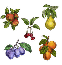 garden fruits with leaves and branches c vector image vector image