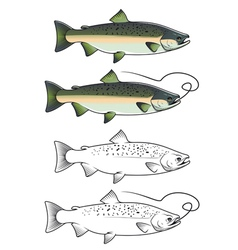 Chum salmon fish vector image