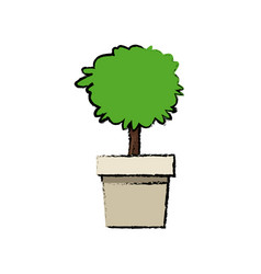 Potted plant tree natural decoration foliage vector