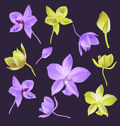 orchid flower set vector image