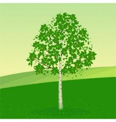 birch tree vector image vector image