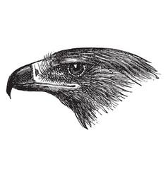 Golden eagle head vintage vector