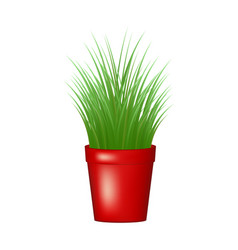 grass in red flowerpot vector image