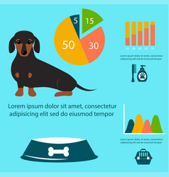 Dachshund dog playing infographic elements vector