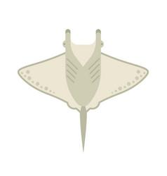Manta ray or stingray vector