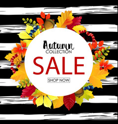 autumn sale round background with colorful leaves vector image