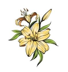floral blooming lilies hand vector image vector image