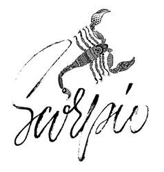 Zodiac sign of scorpio astrology vector