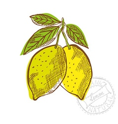 Hand drawn lemon fruits vector