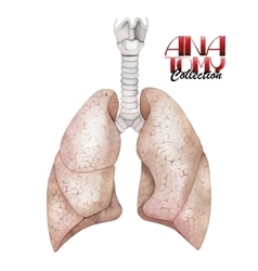 Watercolor anatomy collection - lungs vector