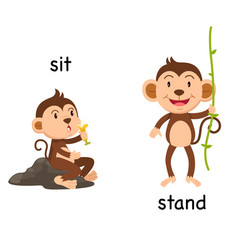 opposite words sit and stand vector image vector image
