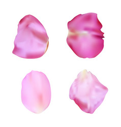 Pink rose petals set realistic vector