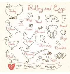 Set drawings of poultry and egg for design menus vector