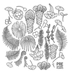 Collection of prehistoric plants vector