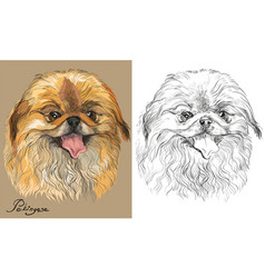 Colored and black and white pekingese dog vector
