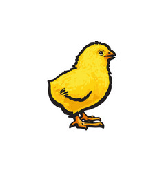 sketch hand drawn yellow chick isolated vector image