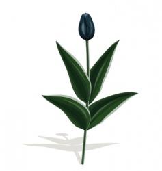 black tulip vector image vector image