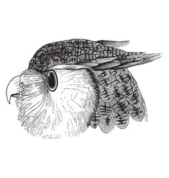 Head of an eagle owl vintage vector