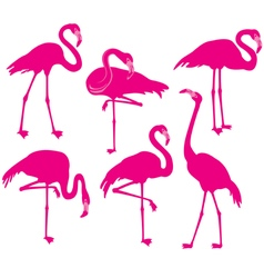 Set of silhouette of flamingoes vector