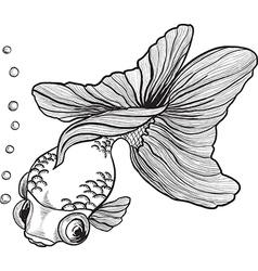 goldfish2 vector image